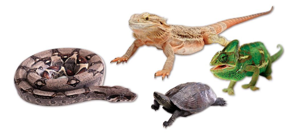 Global Pet Foods is now selling Reptile Food