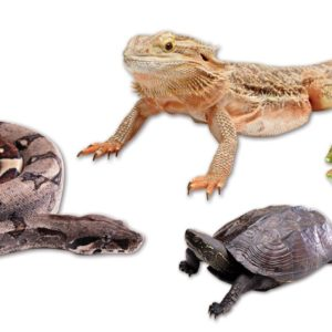 Global Pet Foods is now selling Reptile Food